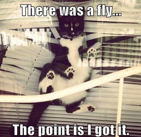 cat_fly